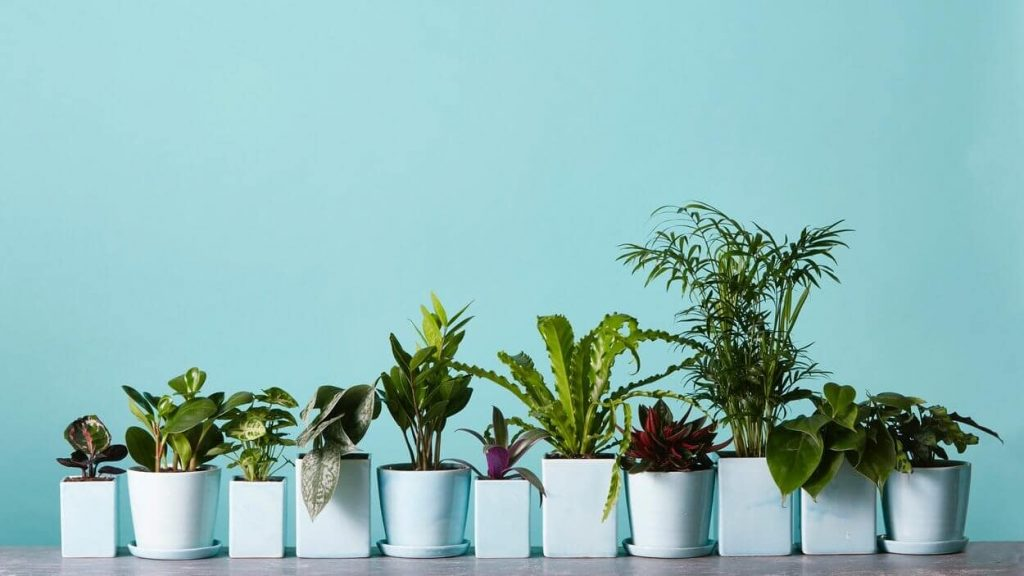 The Sill Plant Shop in Los Angeles