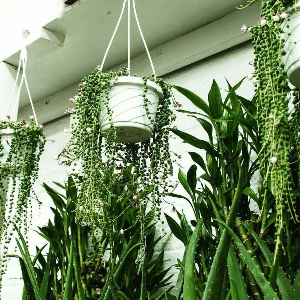 Tropical Plants & Orchids Manhattan Flower & Plant Shop