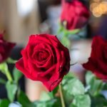 The Best Florists in London for Roses Delivery