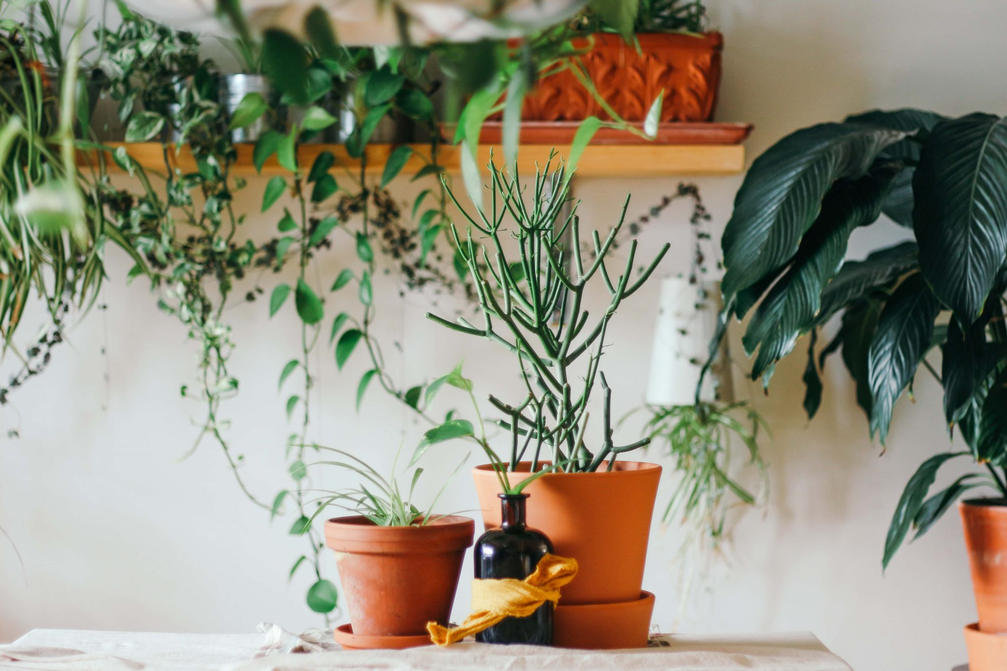 Best Plant Delivery Los Angeles