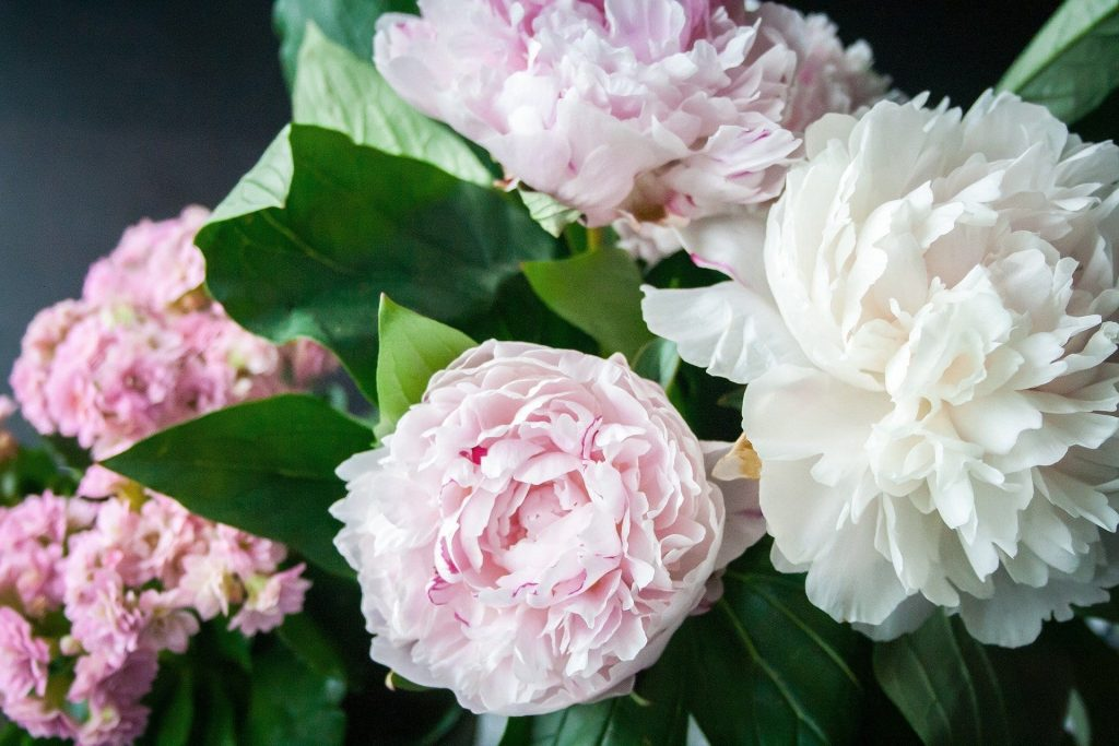 Best Peony Flower Delivery in New York City