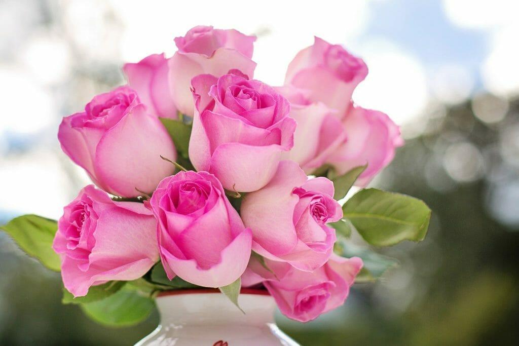 Roses Birth Flower for June