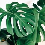 Best Options for Plant Delivery in San Francisco, CA