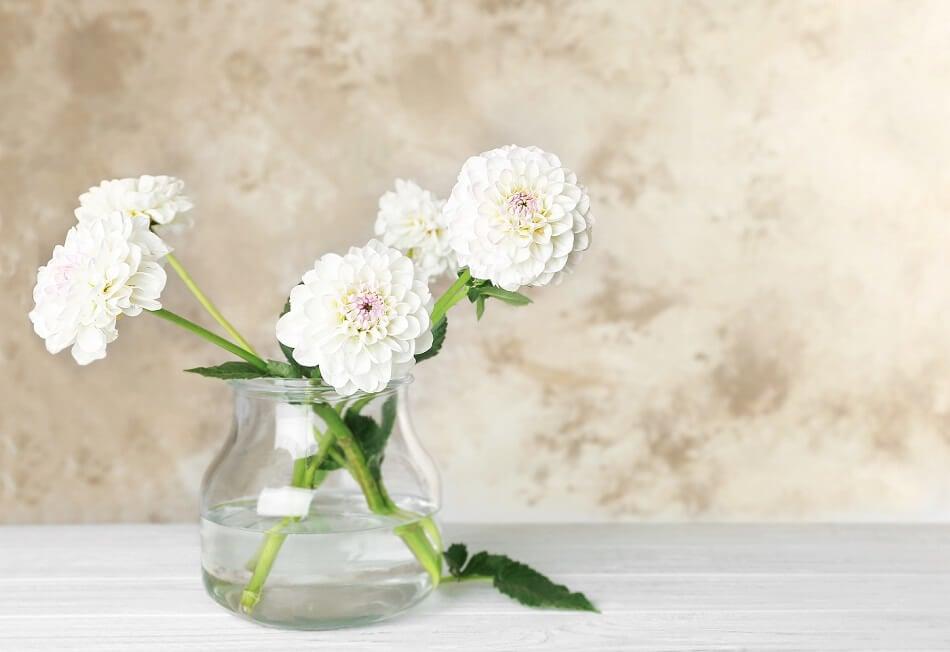 Dahlia Cut Flower Care Tips