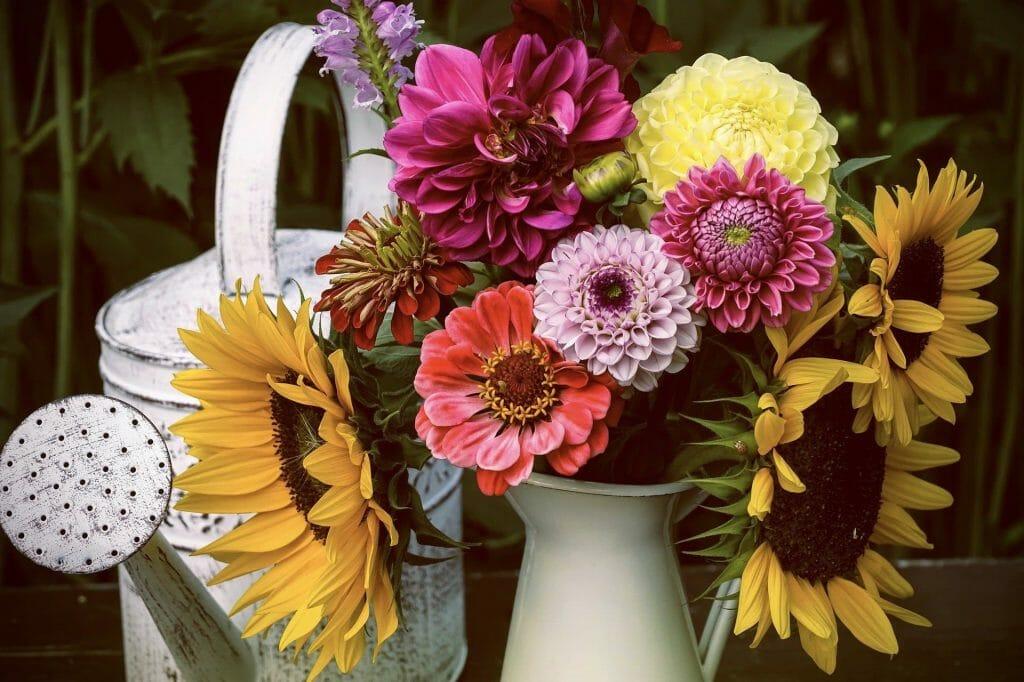 Dahlia Flowers Care Tips