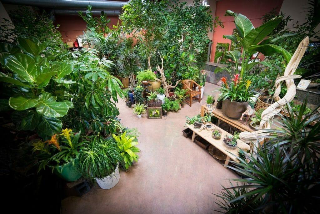 Exotic Plants Ltd Sacramento CA