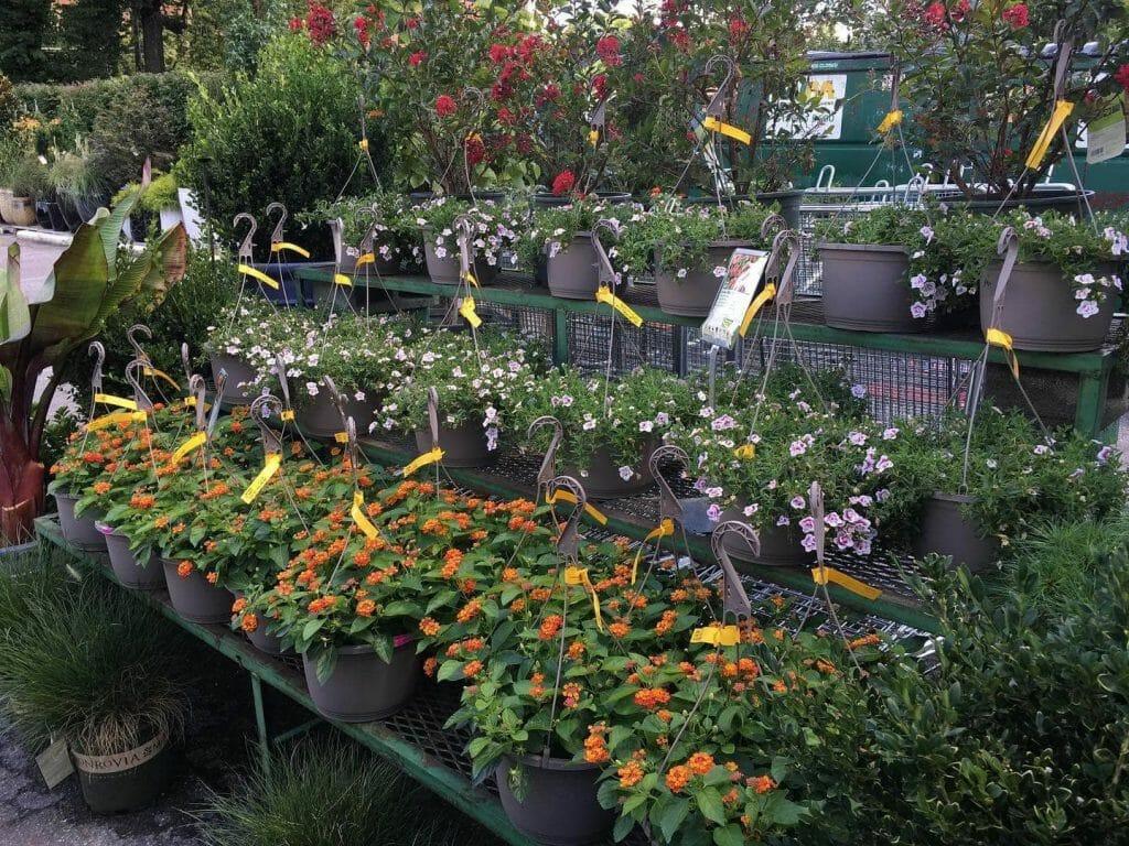 Flower Mart by Sunrise Garden Center in Nashville TN