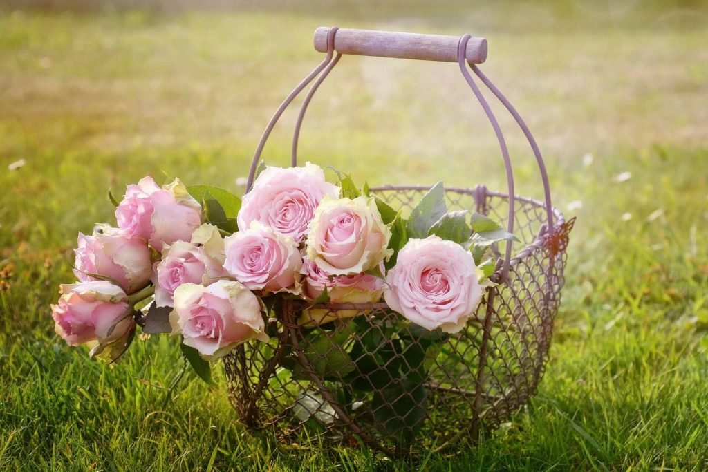 How to care for cut rose flowers