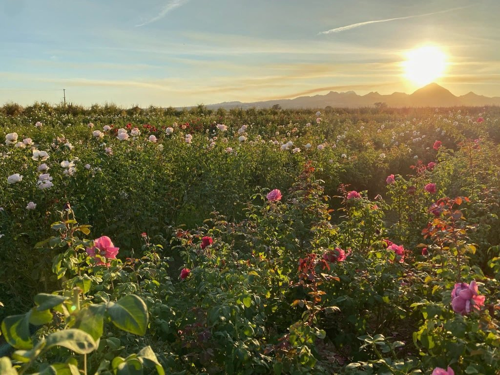 Menagerie Farm & Flower California