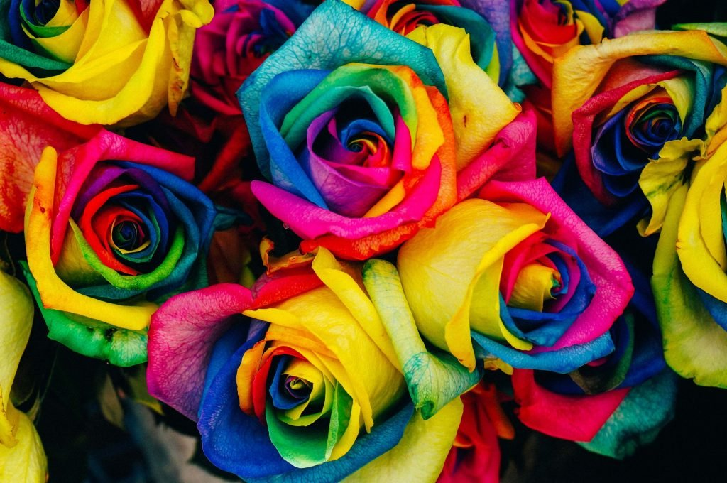 Mixed color rose flower meaning and symbolism