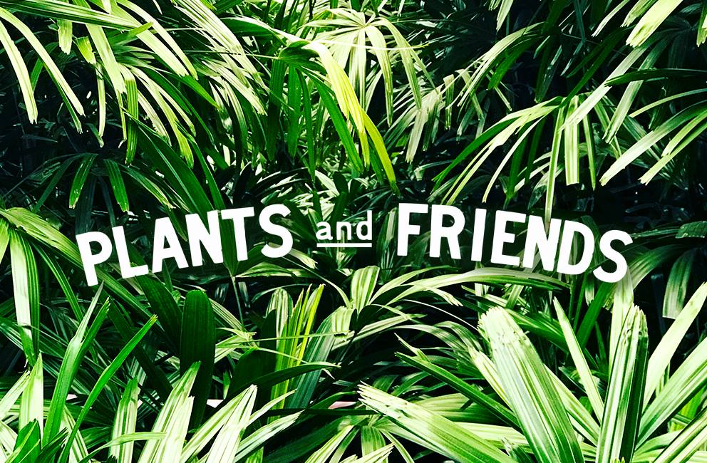 PLANTS and FRIENDS San Francisco Plant Delivery