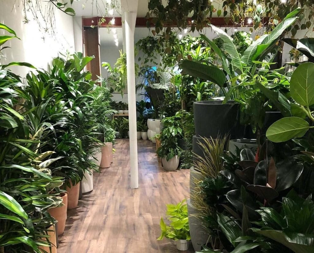 Plant Therapy San Francisco, CA