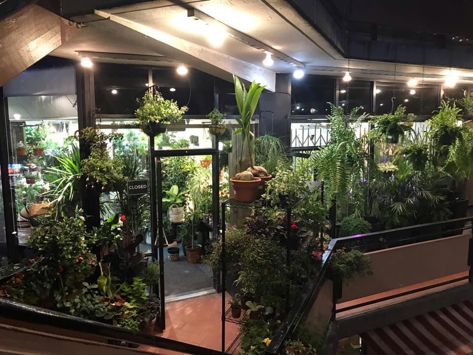 SF Plants San Francisco Plant Studio