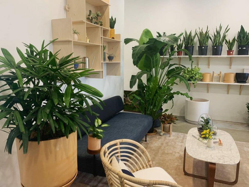 The Flora Culture Houston Flower & Plant Delivery