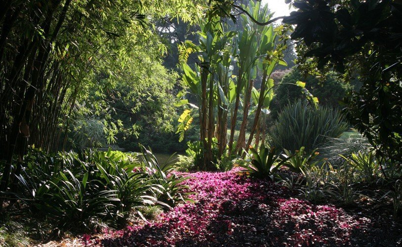 The Jungle Garden at Huntington Botanical Gardens