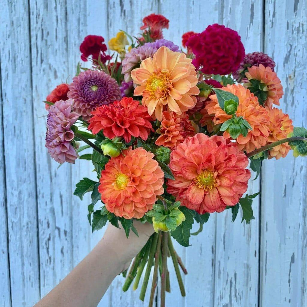 Tracy Rae Cincinnati Flower Delivery