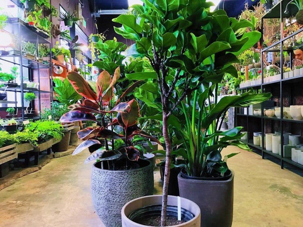 Utsuwa Floral Design Plant Shop in San Francisco, CA