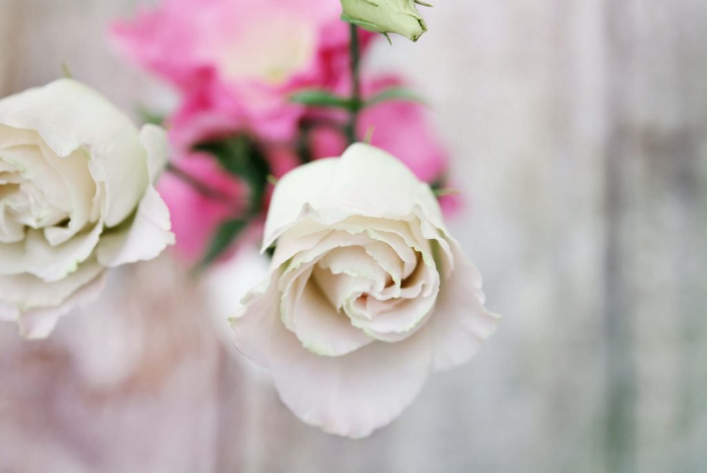 White rose flower meanings and symbolism