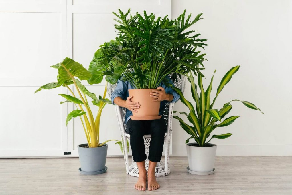 Bloomscape Best Online Plant Shop for Houseplants and Indoor Plants in Boston, MA