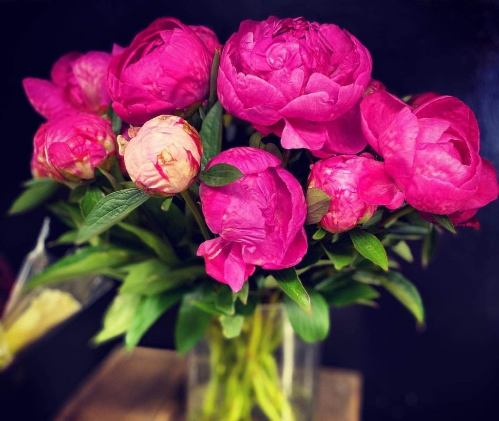 Cattleya European Floral Flower Shop in Jacksonville