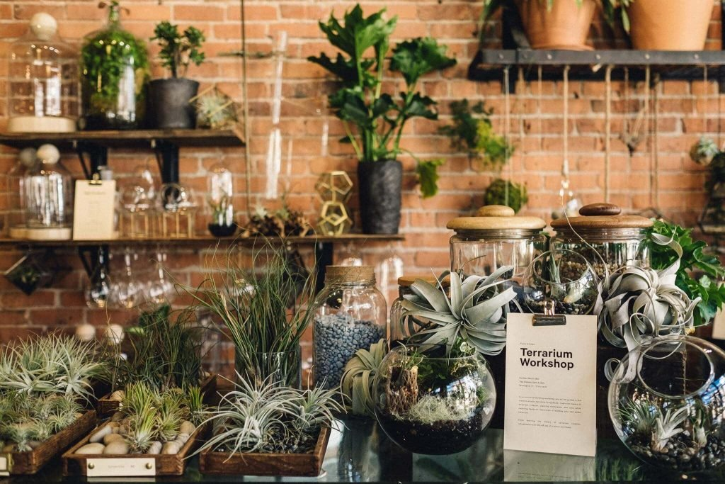 Glasswing Plant Shop and Plant Delivery in Seattle, WA