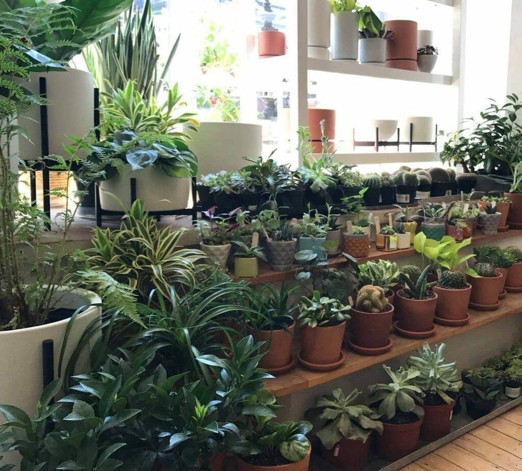 Niche Urban Supply Best Plant Shop in Boston, MA