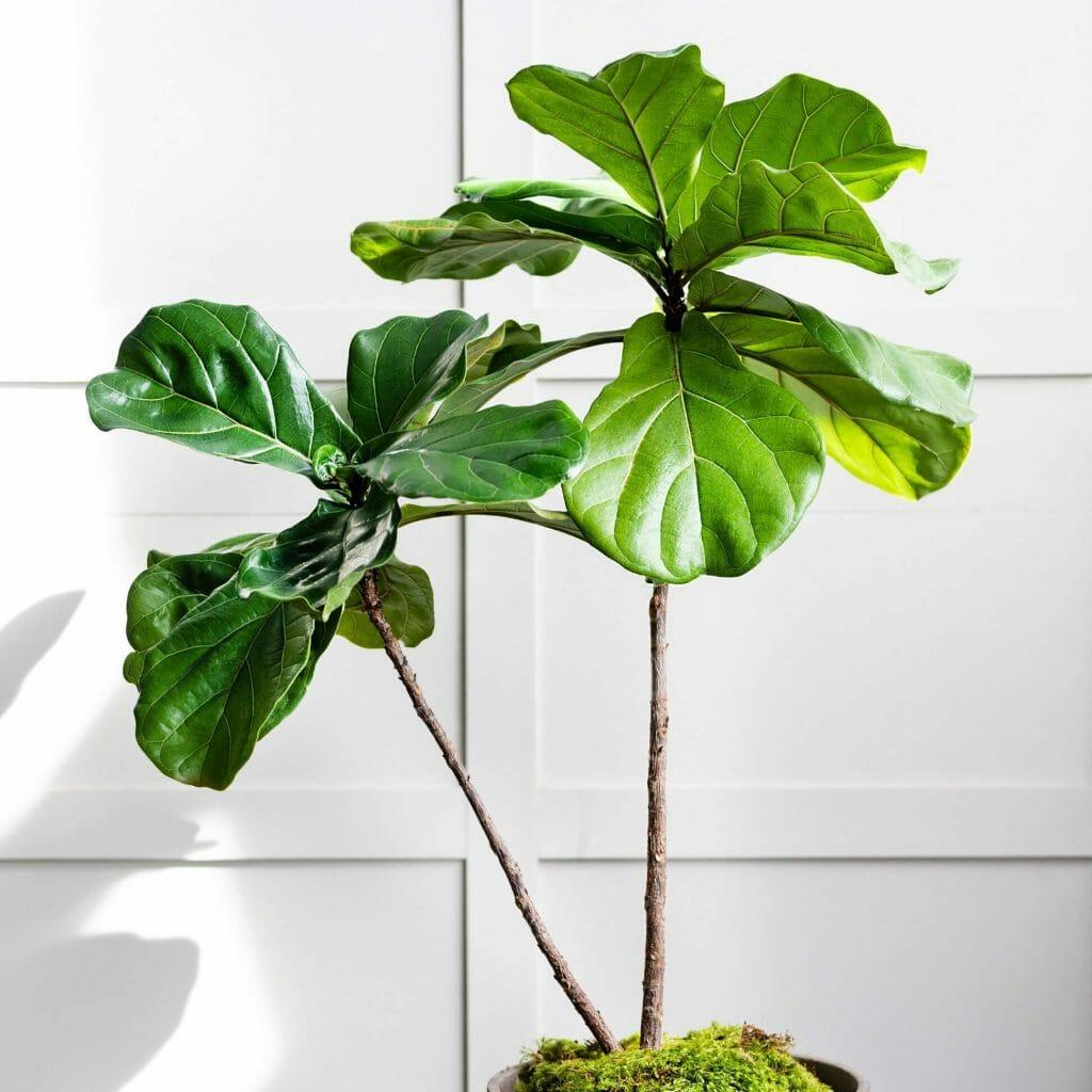Terrain Best Online Plant Delivery in Boston, MA