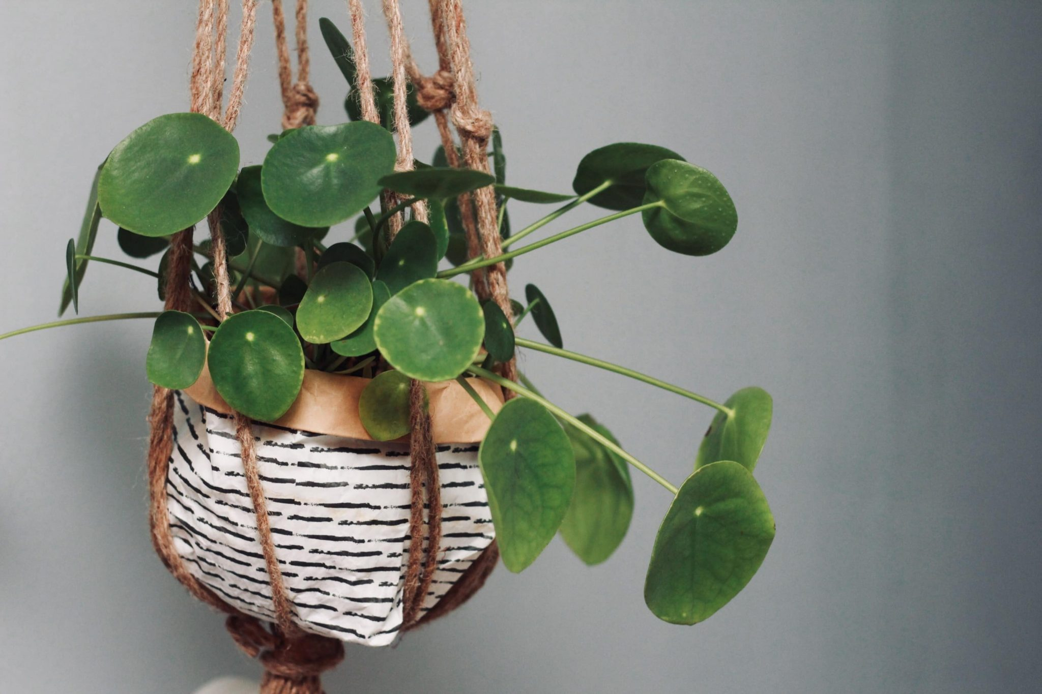 The Best Indoor Hanging Plants