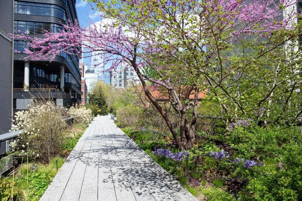 The High Line Reopens on July 16th