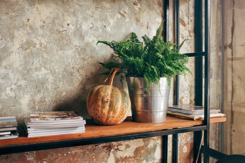The Kimberly Queen Fern Indoor Hanging Plants