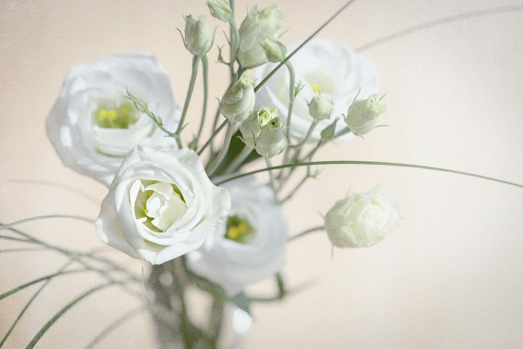 The Lisianthus Flowers (Eustoma)