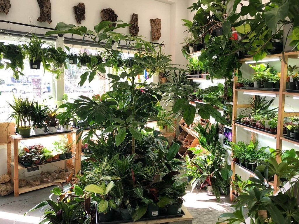 The Plant Store in Seattle, WA