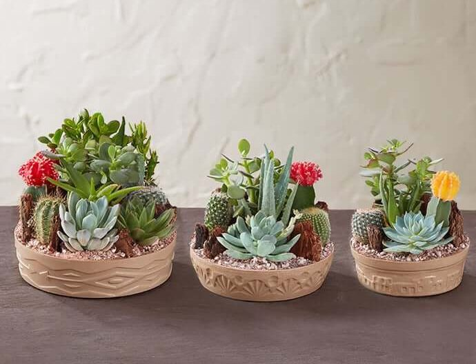 1800 Flowers Cactus Dish Garden Delivery USA