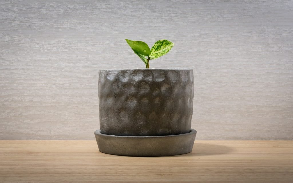 50 Best Modern, Decorative, Unique, and Classical Indoor Planters and Pots