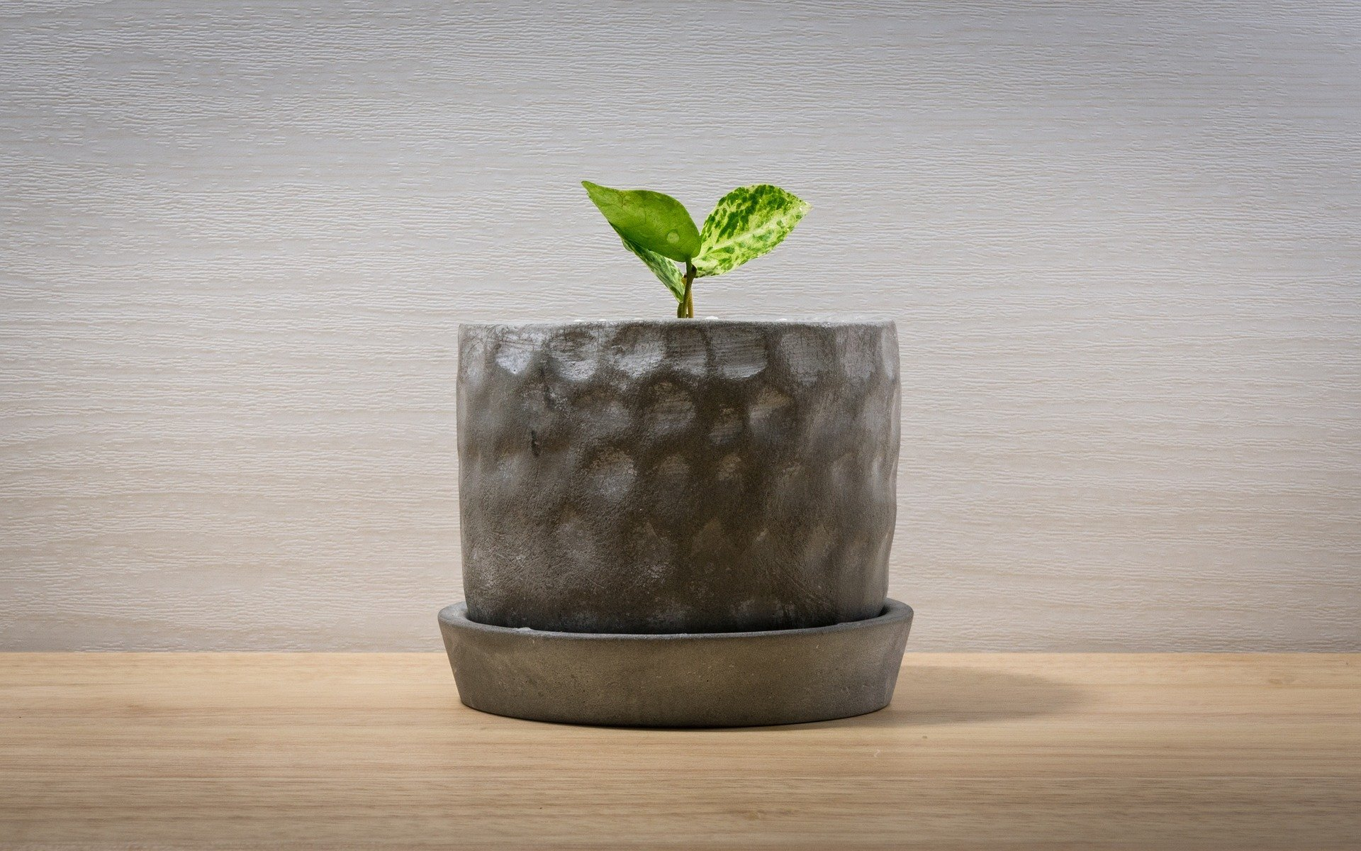 50 Stylish Indoor Planters Pots For Your Home Office Petal Republic