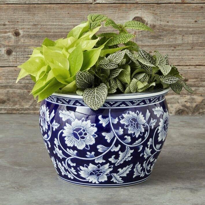 Blue & White Ceramic Indoor Planter