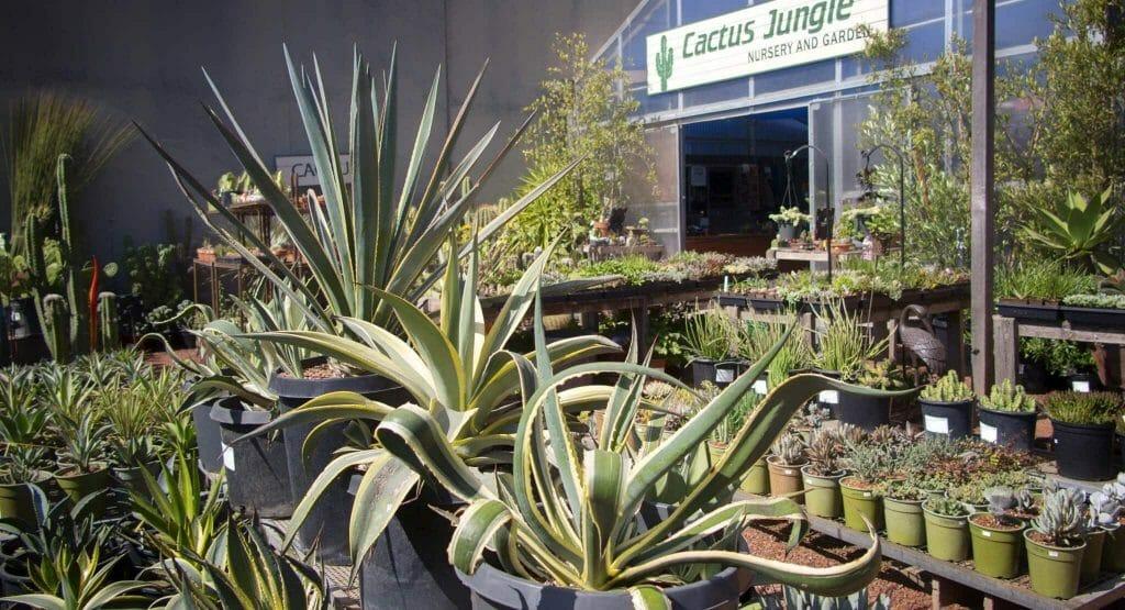 Cactus Jungle Cactus Delivery San Francisco Bay Area