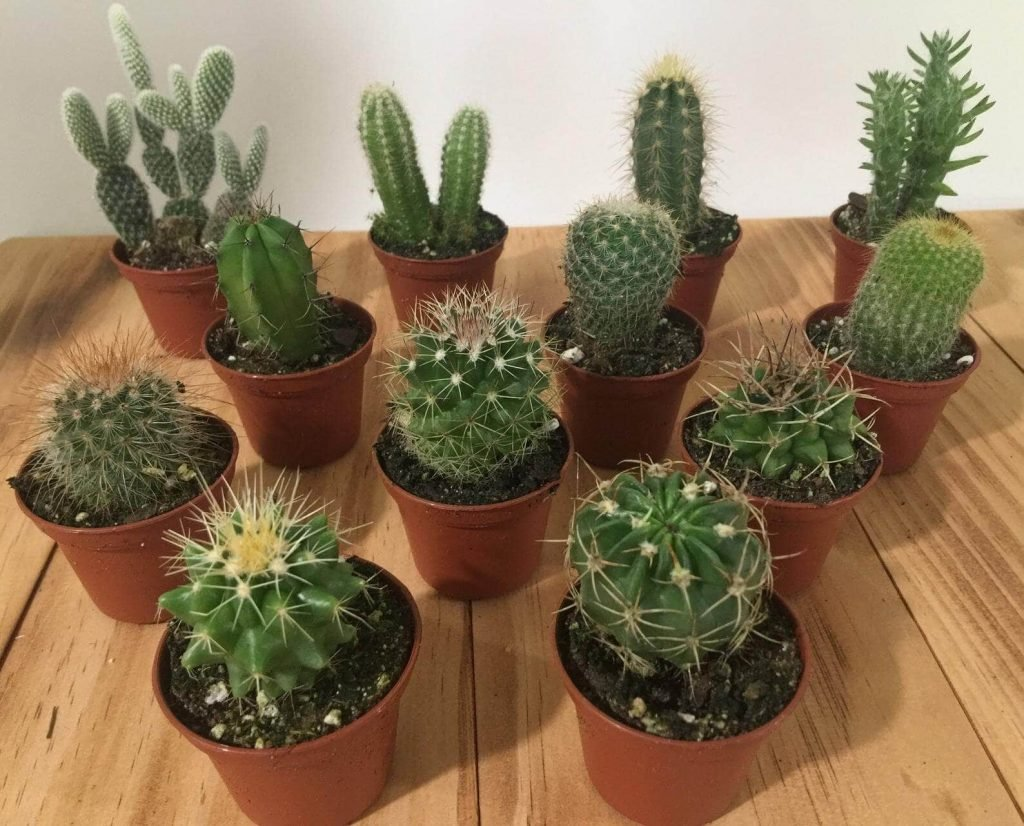 Etsy Cactus Delivery USA