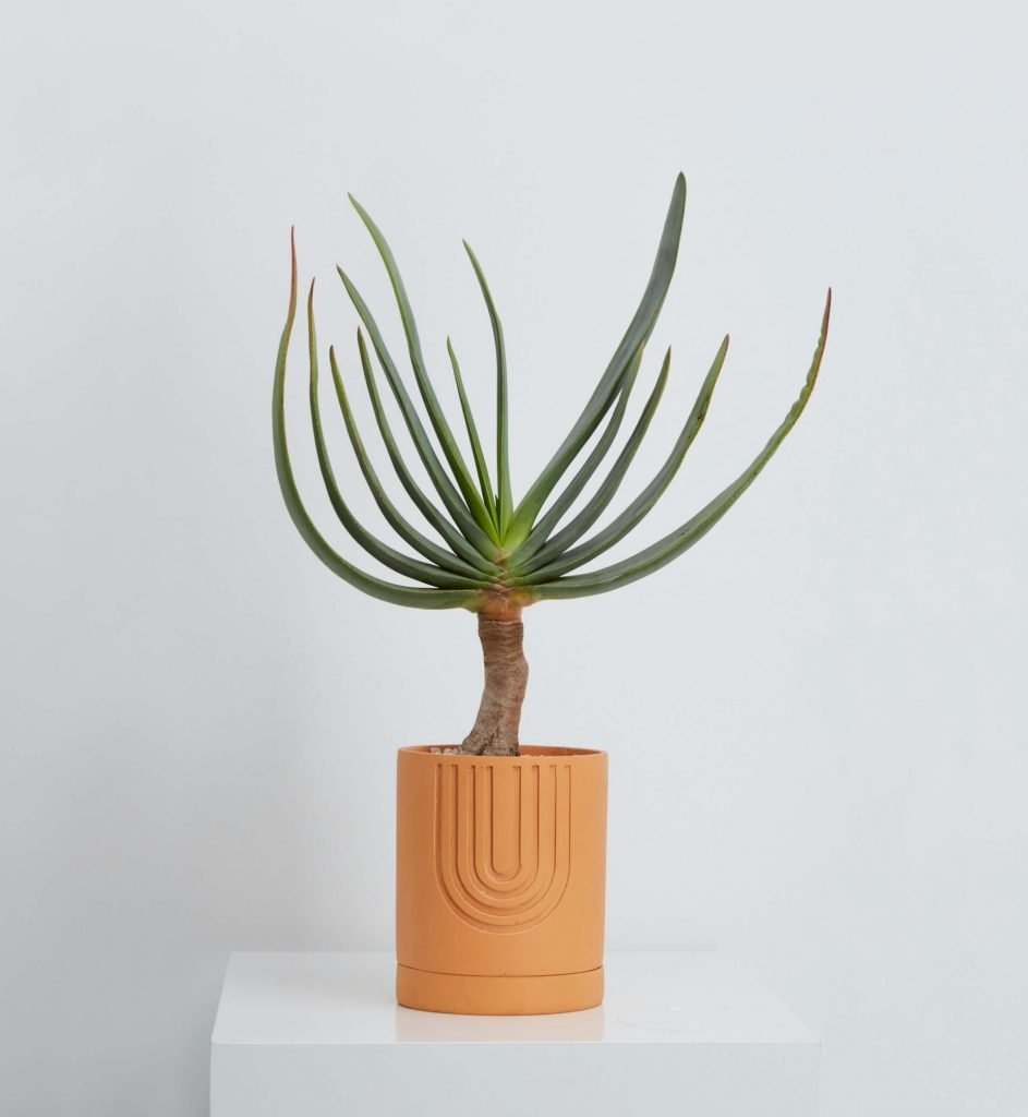 Etch terracotta indoor plant pot