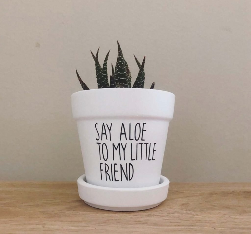 Etsy Aloe Vera Plants with Planters