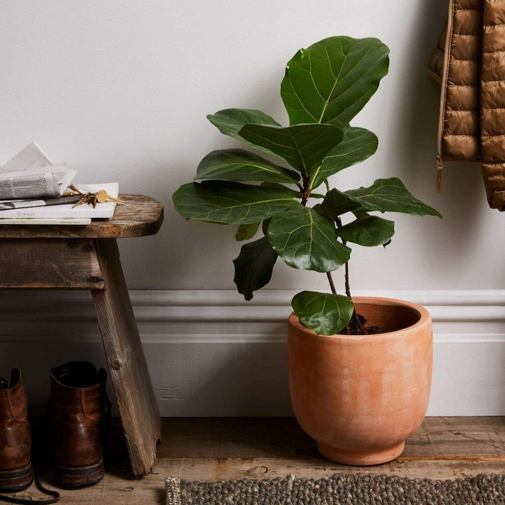 Footed Terra-cotta Indoor Planters