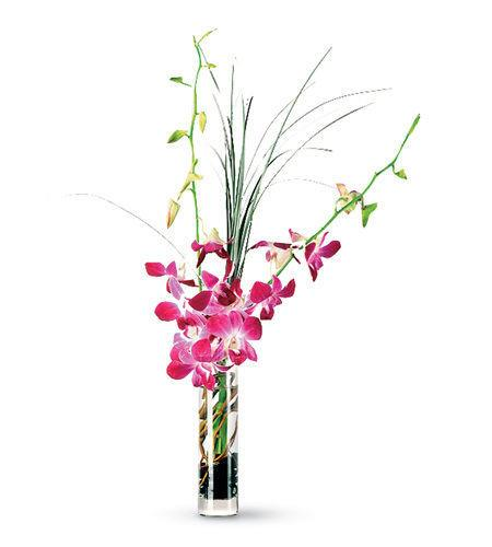 French Florist Orchid Delivery in Los Angeles