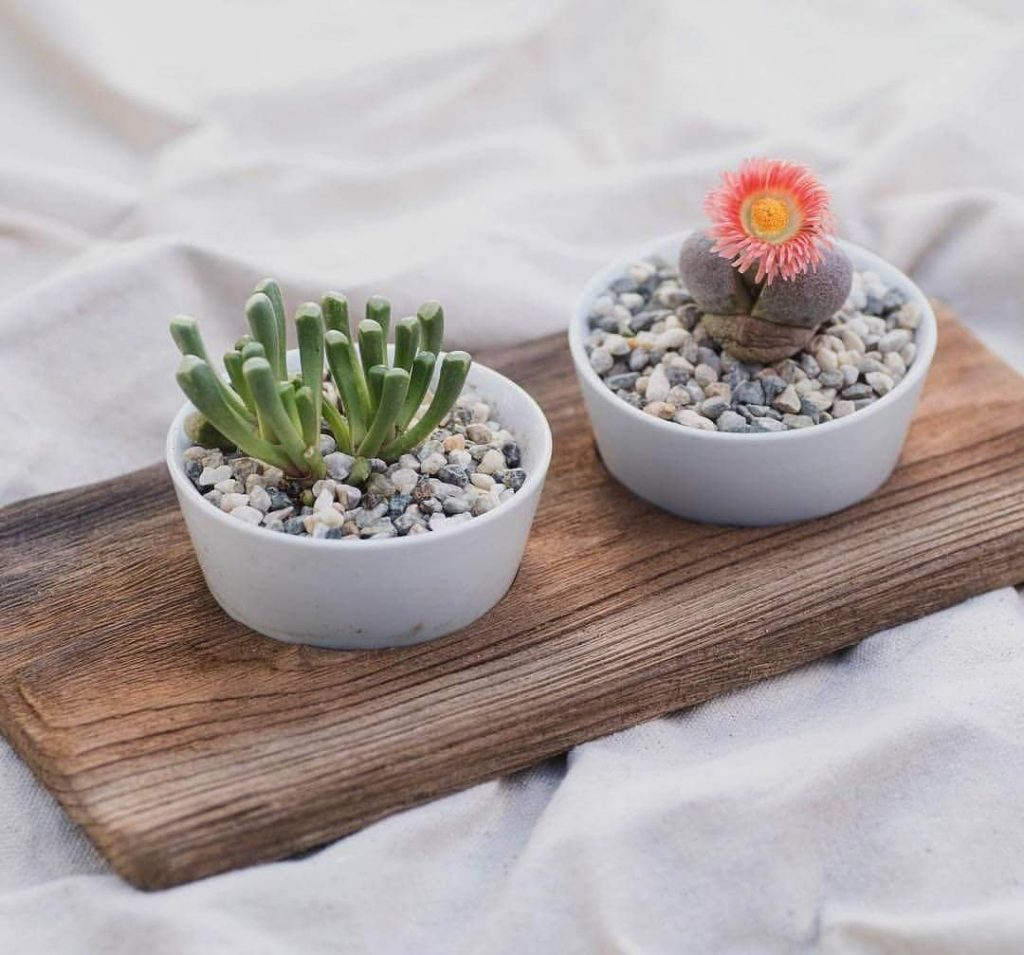 Planet Desert Nationwide Cactus Delivery USA