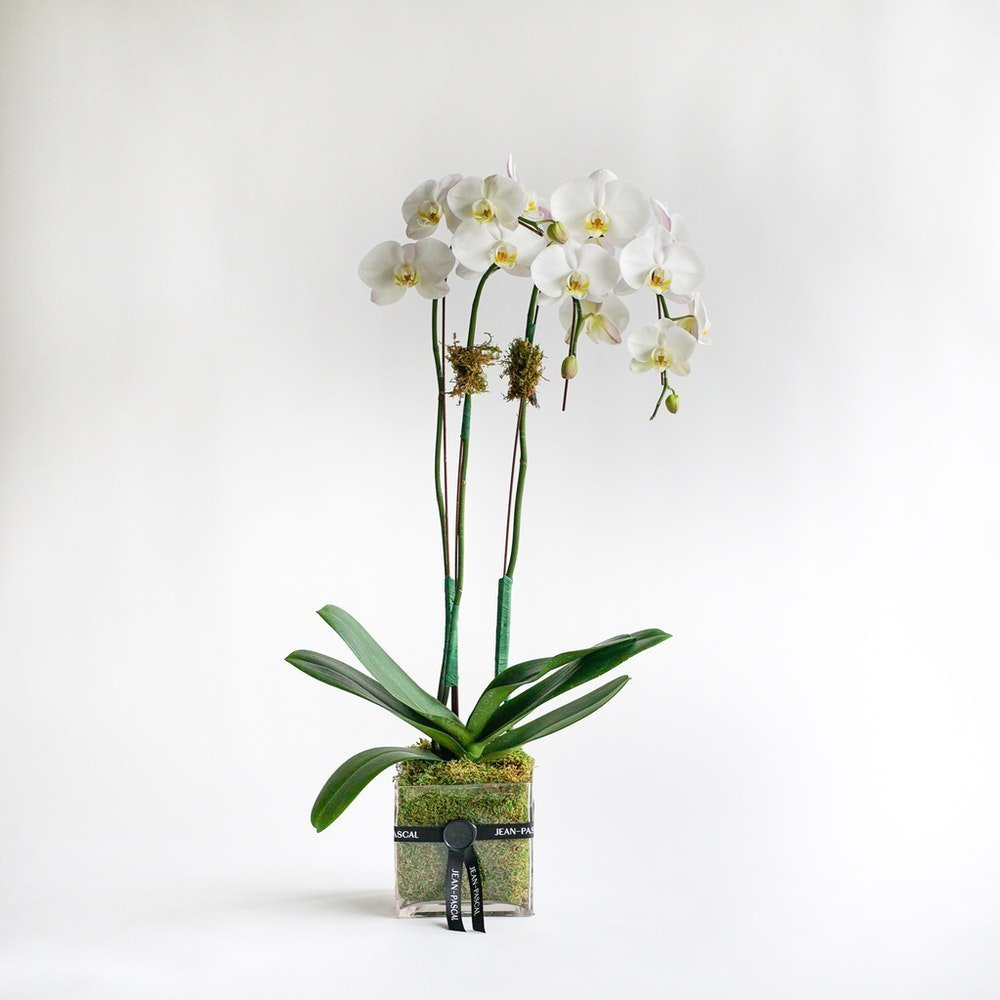 Same Day Orchid Delivery in Los Angeles from Floom