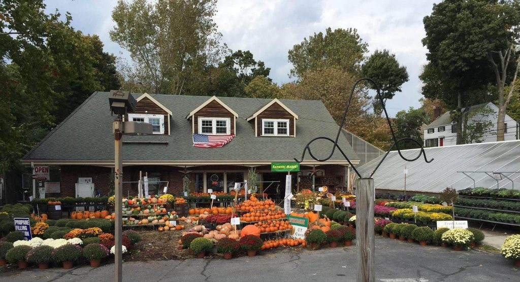 Springdale Florist Stamford CT