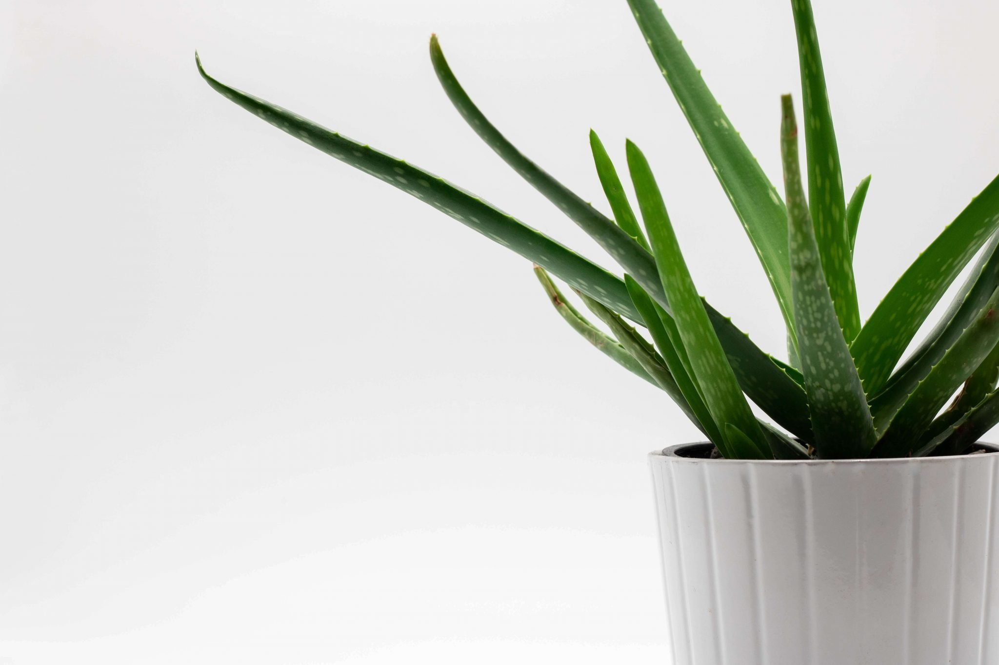 The Best Aloe Vera Plant Delivery Services in the USA