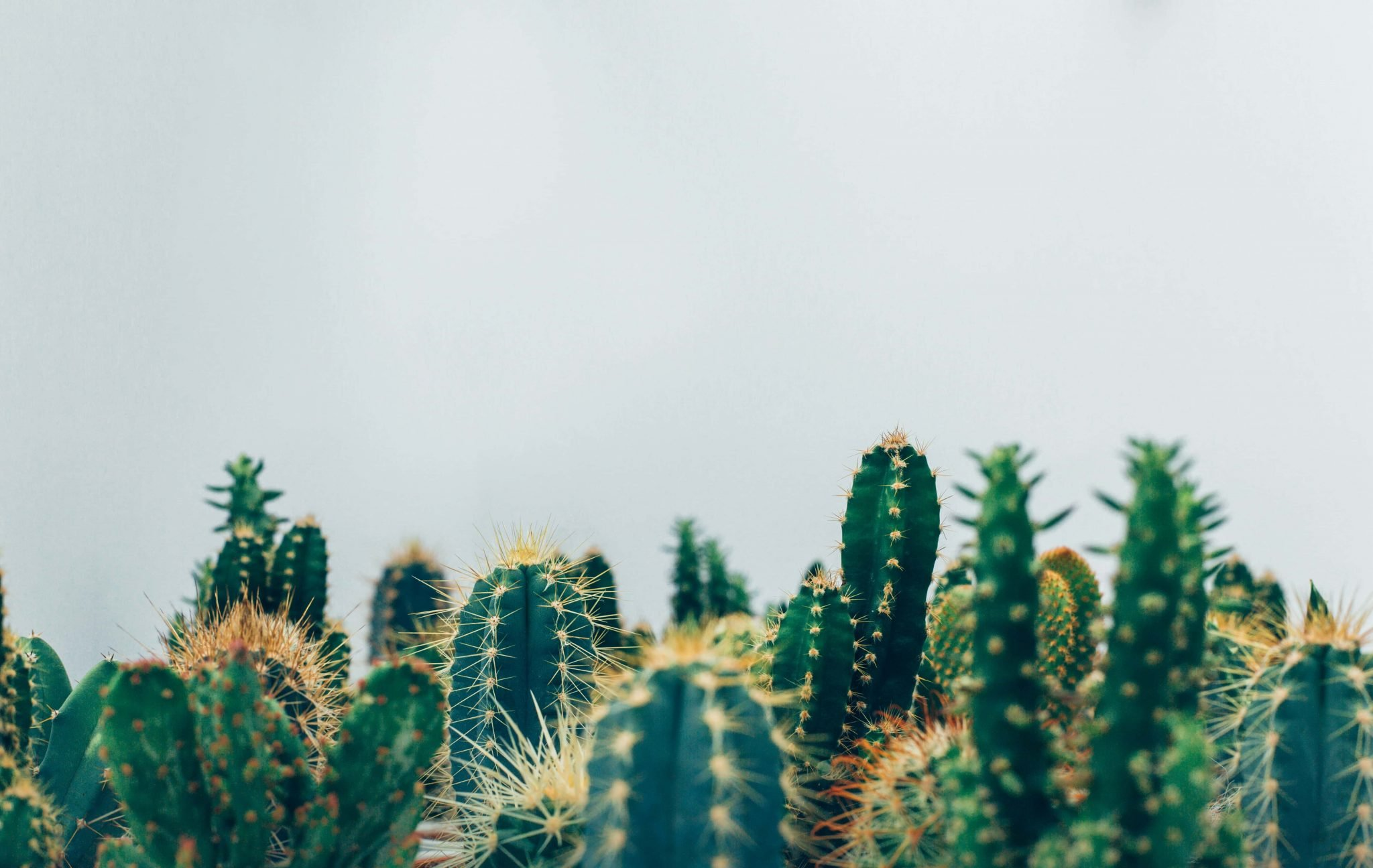 The Best Cactus Shops and Cactus Delivery Services int he USA