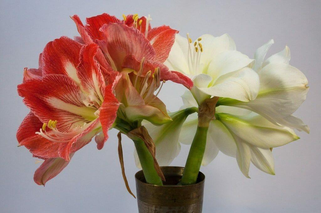 The Floral Garden Syracuse NY Floral Studio
