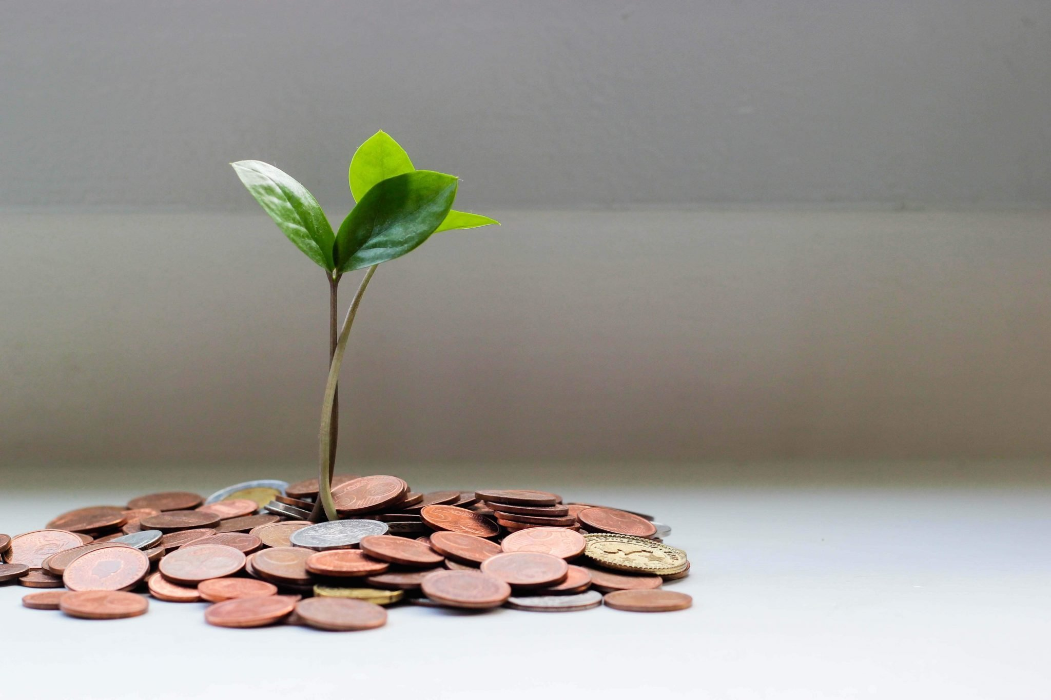 Ultimate Guide to Growing and Caring for Money Tree Plants