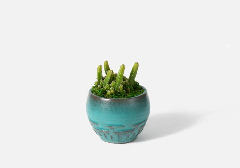 UrbanStems Cactus Delivery